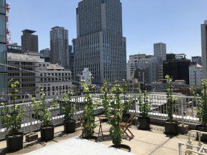 2021年5月31日 枝葉がぐんぐんと上に伸びていきます。